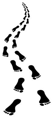 שלבים בצעידה