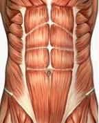 בקע בשריר בטן
